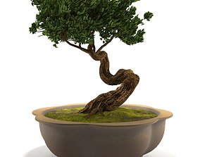 flower 3D Bonsai tree