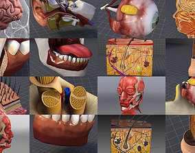 3D model Cephalic Anatomy Collection - Head