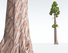 VR / AR ready EVERYPlant Coastal Redwood 10 --12 Models--