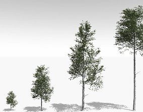 3D Quaking Aspen Model in Multiple Growth Stages