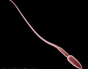 3D model Sperm
