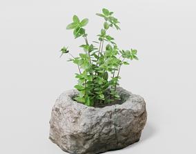2 Plants and photoscanned rock pot 3D model