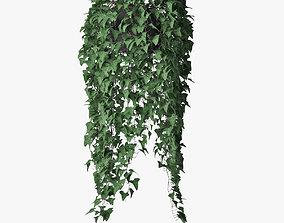 3D model ivy in pot 08