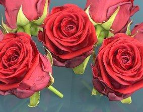 3D asset China Chinese Rose Rosa Chinensis 2