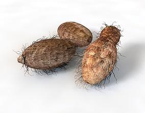 3D model Colocasia Taro root