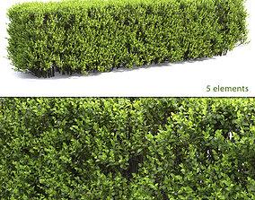 Buxus Hedge 02 3D