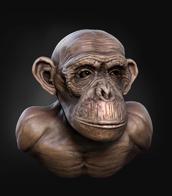 a quick sculpt of chimpanzee