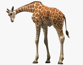 3D model Giraffe Rigged