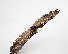 Eagle Z 3D model