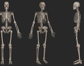 skeletal Human Skeletal System High Poly 3D model