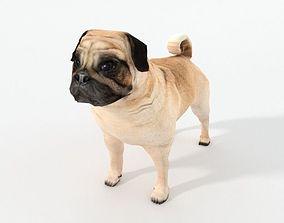 Dog Pug 3D asset low-poly