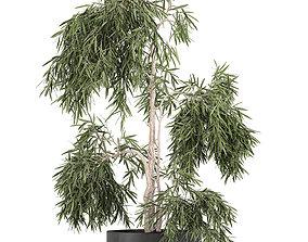 3D model Decorative olive tree in a black flowerpots 733