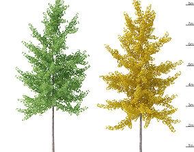 Ginkgo biloba trees 8m 3D model