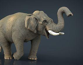 3D model Asian Elephant 2