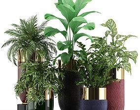 3D model Plants collection 233 Longhi godwin