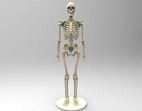 3D print model human-bones Human Skeleton