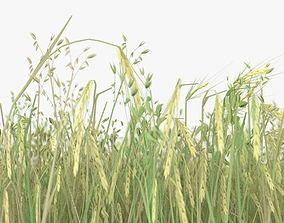 wheat field 3D