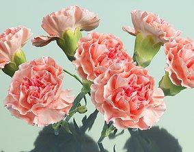Carnation Clove Pink Dianthus Caryophyllus 3D asset