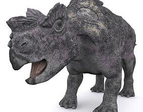 Achelousaurus 3D reptile