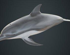 Dolphin 1B 3D asset