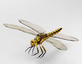 3D model Dragonfly High Detailed