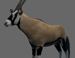 3D asset African Oryx