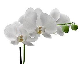 3D Orchid interior