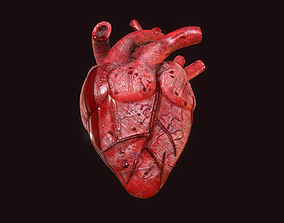 3D model Ripped out human heart