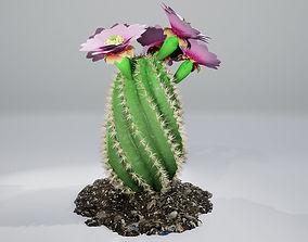 3D model PBR Spiral Cactus