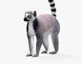 Ring-Tailed Lemur HD 3D