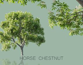 Horse Chestnut Trees 3D