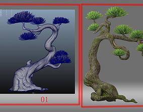 cartoon tree pine tree 3D