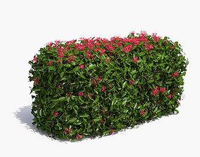 3D Jungle Geranium Hedge Flowering