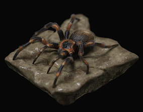Red-knee Tarantula Brachypelma smithi 3D model