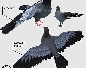 Pigeon 3D model