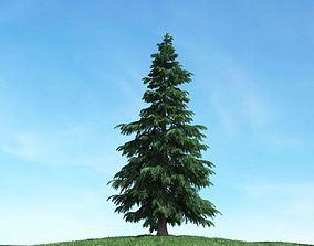 Conifer Tree 3D