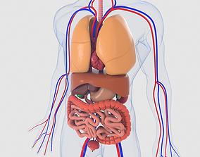 Human organs 3D