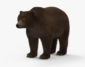 3D model Grizzly Bear HD
