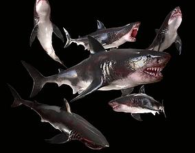 3D asset Great White Shark Model 7 animations Pack
