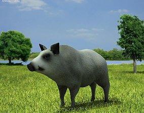 3D model Boar Sus Scrofa