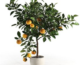 Citrus Tree in Pot 2 3D model