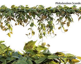 3D model Philodendron Scandens Micans
