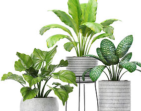 3D model Plants collection pot interior
