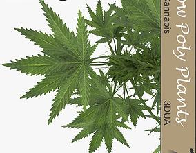 Cannabis universal plant 3D asset