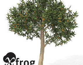 3D XfrogPlants Japanese Medlar