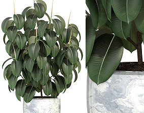 Plants collection 290 3D