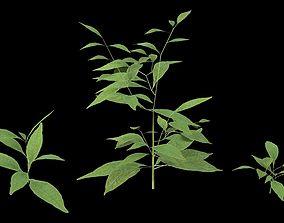 Plants plant 3D