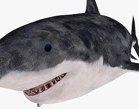 3D model Great white shark fish