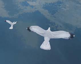 Low Poly Seagull Flock 3D asset animated