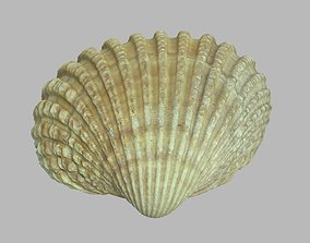 Single seashell photoscan 07 3D